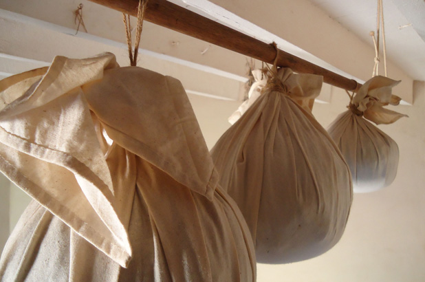 A row of hanging puddings in cloths.