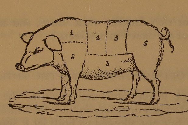 An illustration of a pig with sections describing the different cuts of meat.