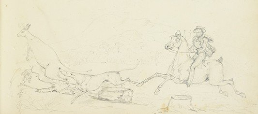 Sketch of a man on a horse and a dog hunting a kangaroo.