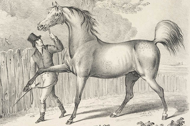Detail of a lithograph of a race horse