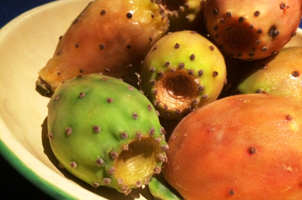 prickly pear fruit (needles removed) in an enamel bowl