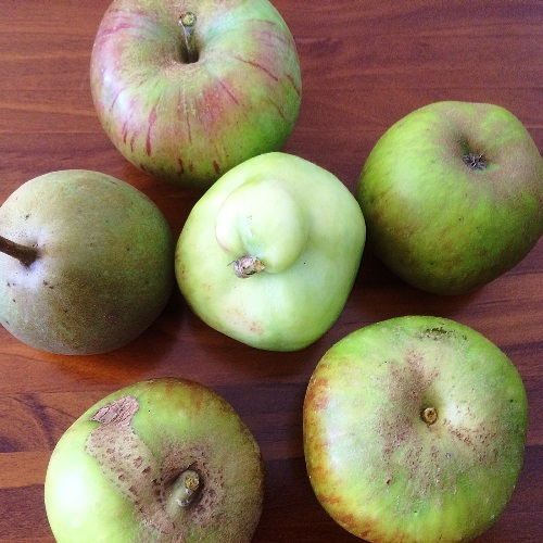 Heirloom apples from the orchard at Port Arthur